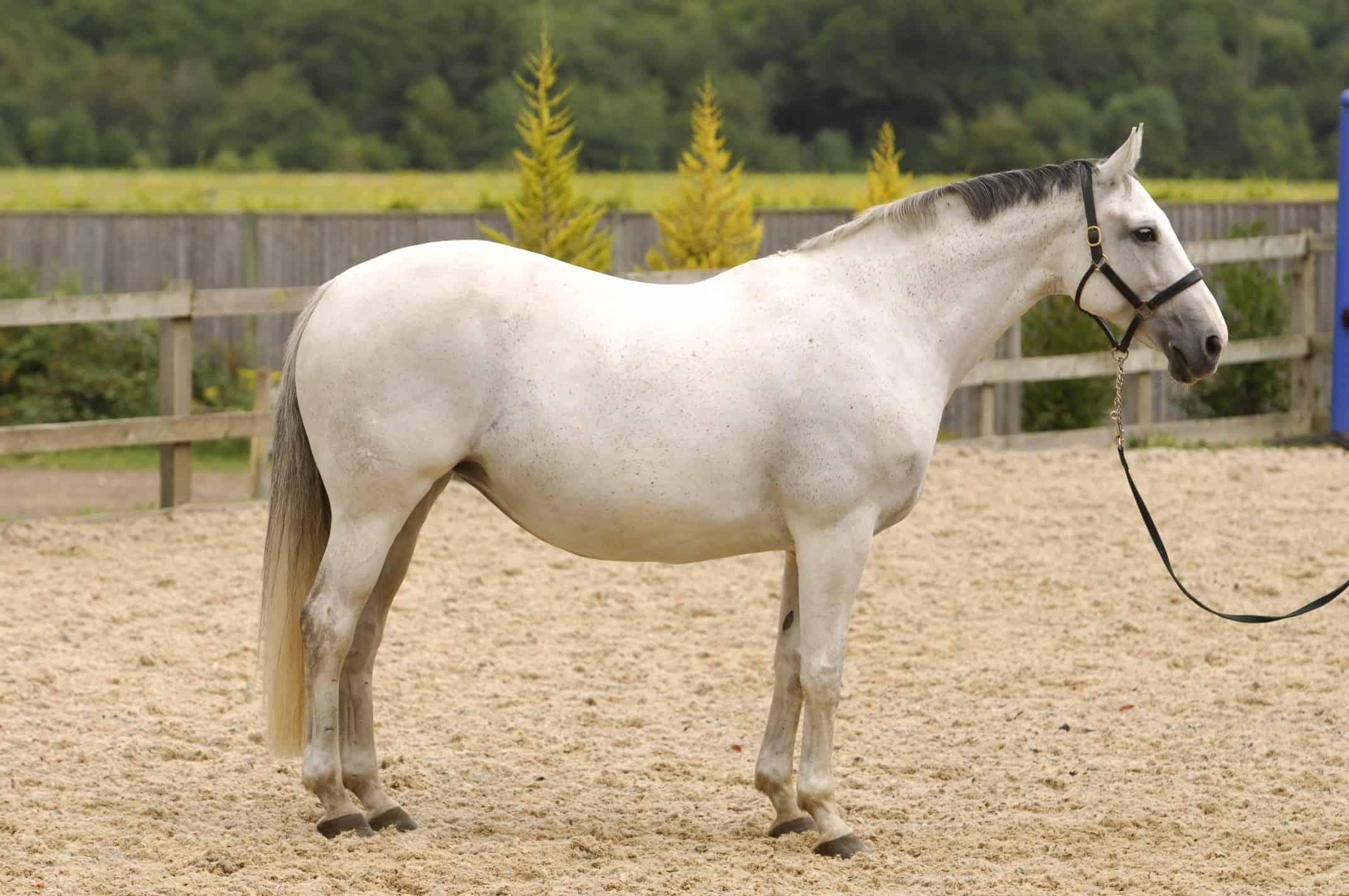 Fat Horse Slim Horse And Rider