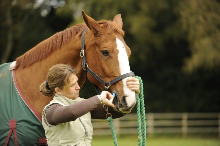 Worm control, season by season | Horse and Rider