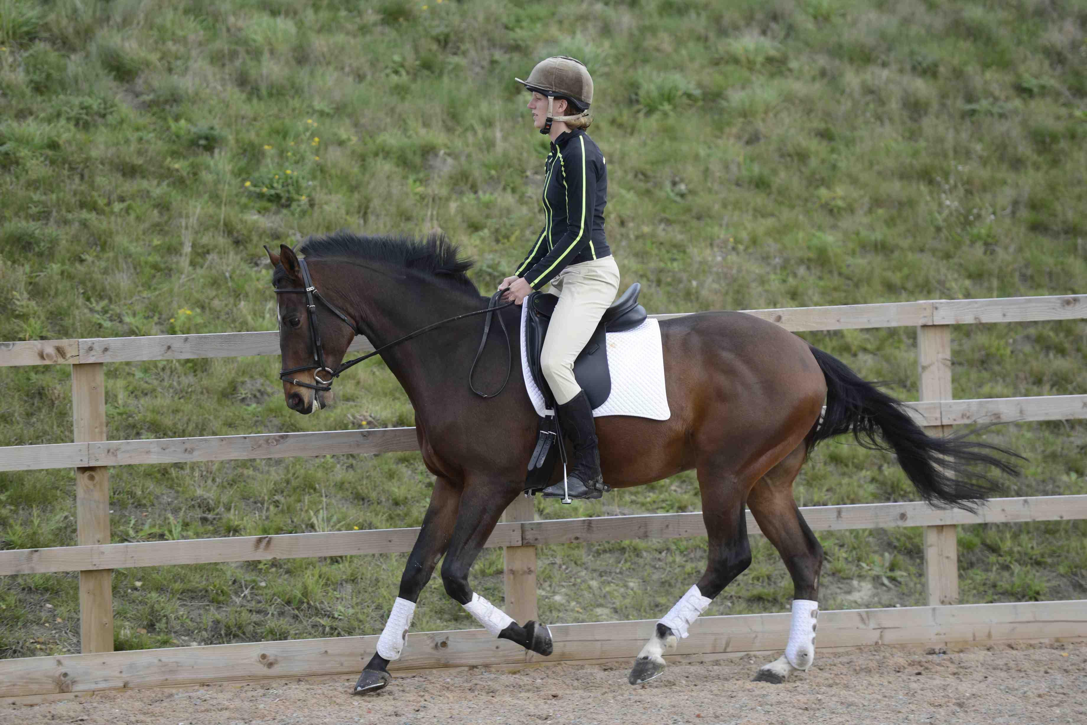 Insurance Horse