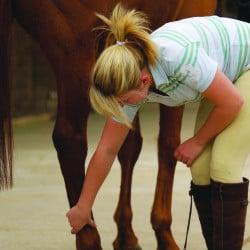 Inside your horses leg