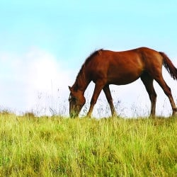 Strip Grazing Explained