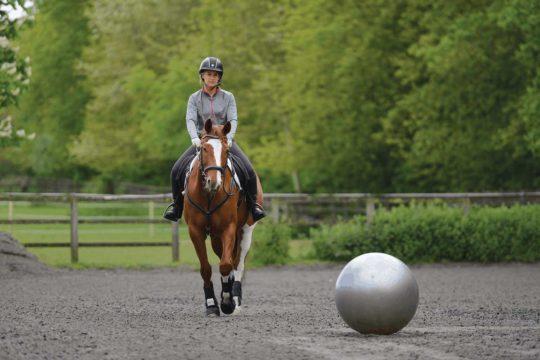 De-sensitising a horse