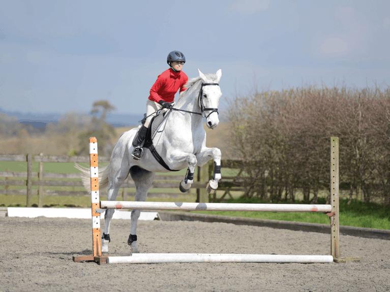 improve-your-horses-jump