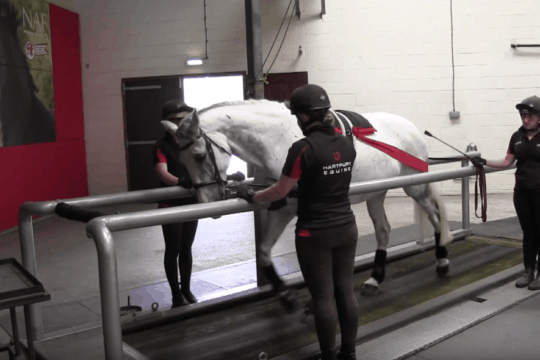 Hartpury College – Treadmills