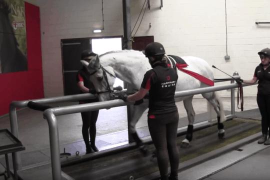 Hartpury College – Treadmills
