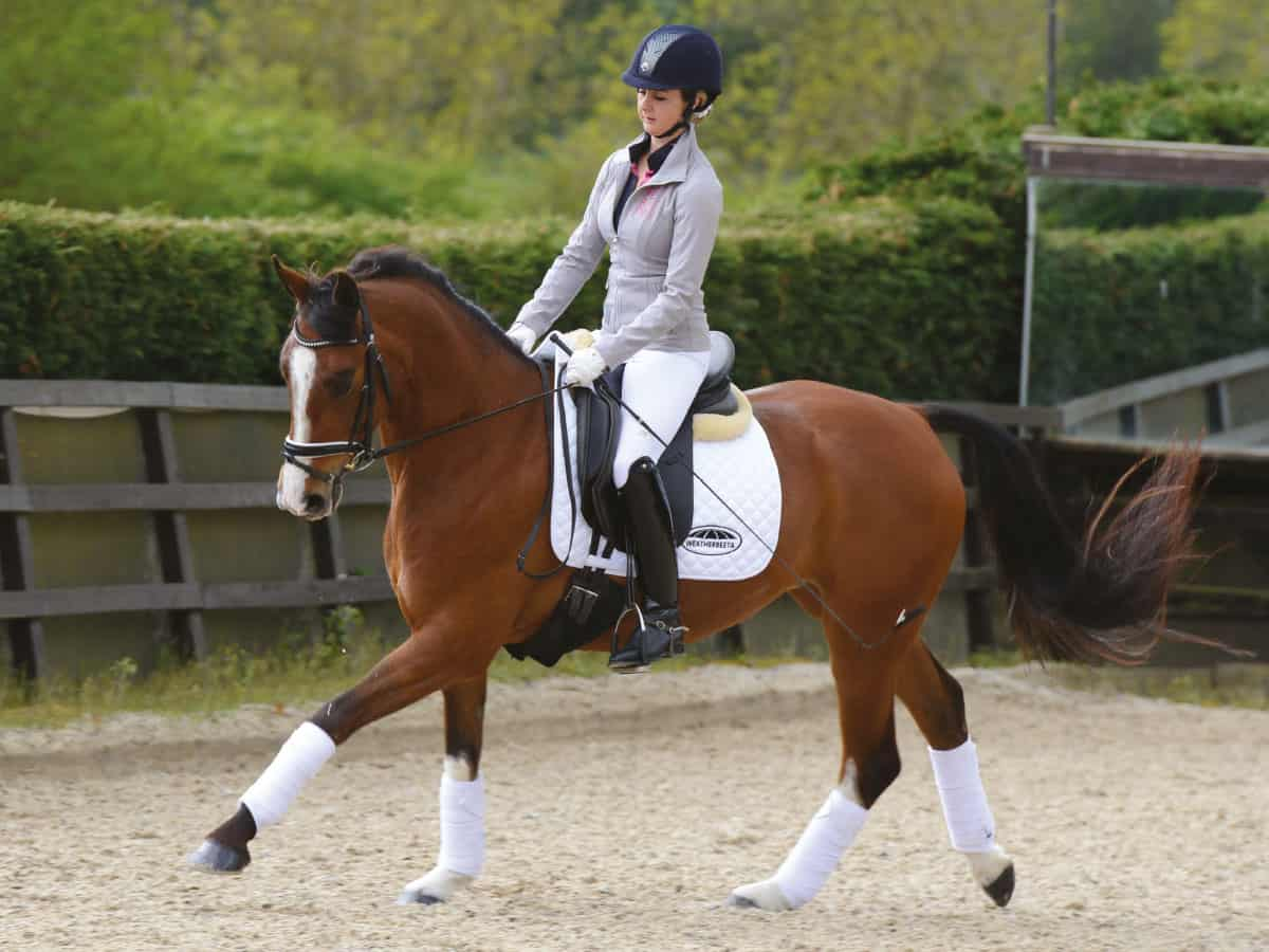 Thirty Minute Flatwork Exercises Schooling Plans Horse Rider Magazine