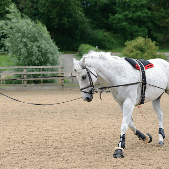 Equine Rehab: How lungeing can help