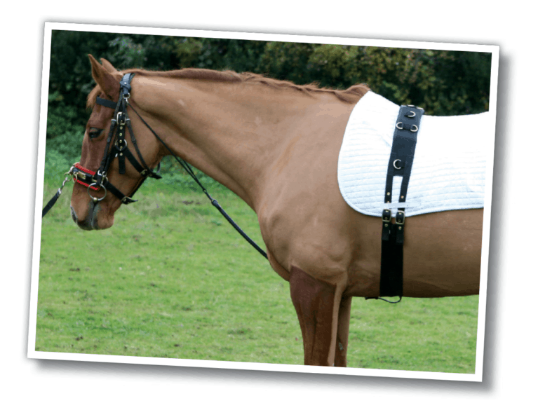 Gear Guide Equestrian Product Reviews And Releases