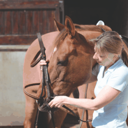 The best bit for your horse