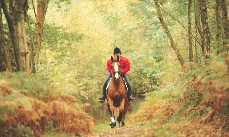Feel confident with any horse