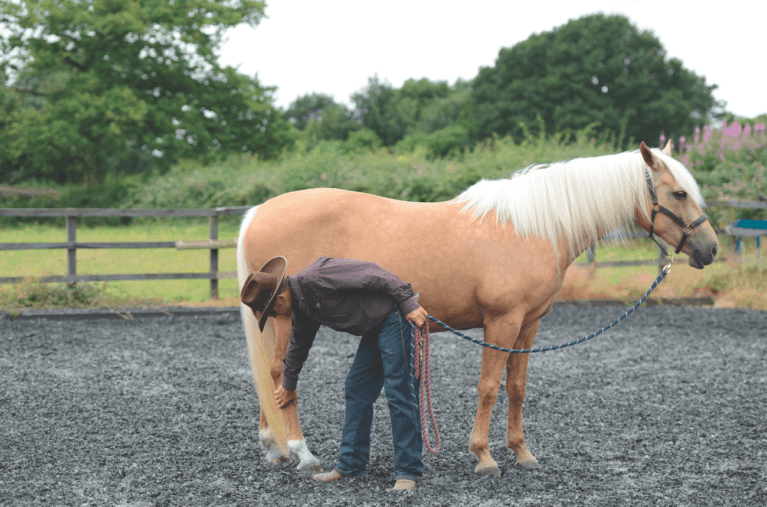 Make your horse easy to handle with Warwick Schiller