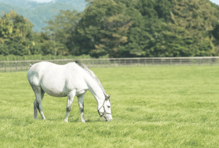 Laminitis low-down
