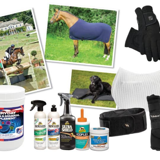WIN with May Horse&Rider
