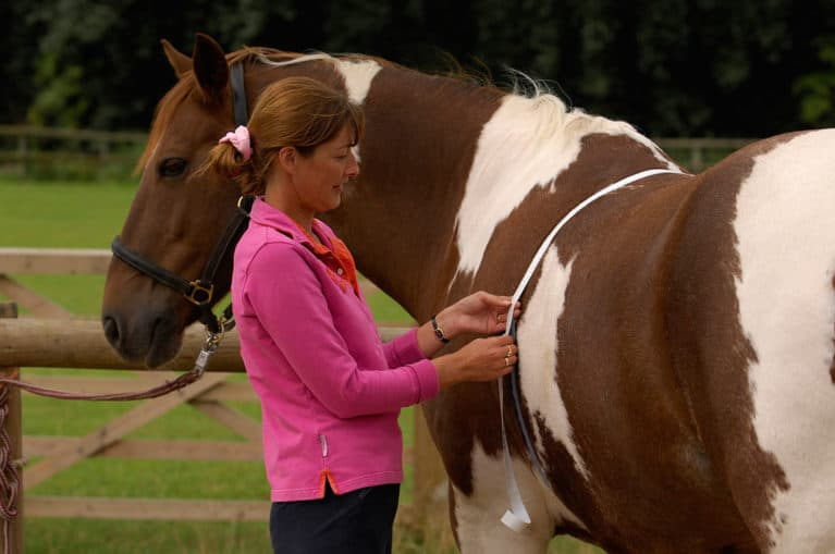 Overweight horses are four times more likely to develop laminitis