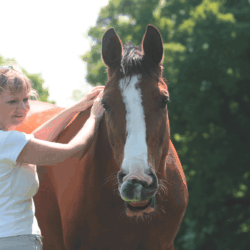 Make your horse's day