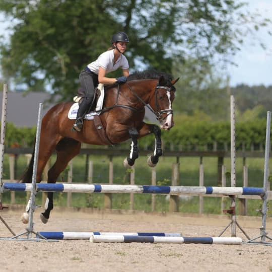 Five simple steps to improve your horse's jump