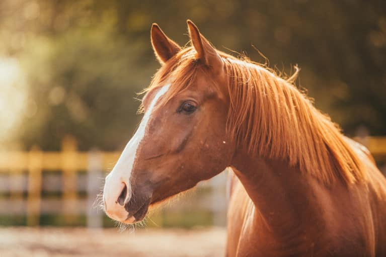 Keep your horse safe this summer