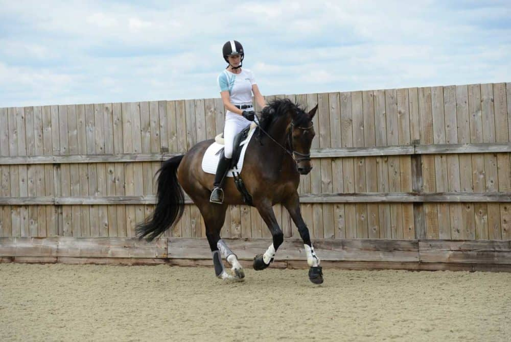 Dressage test problem-buster with Sandy Phillips