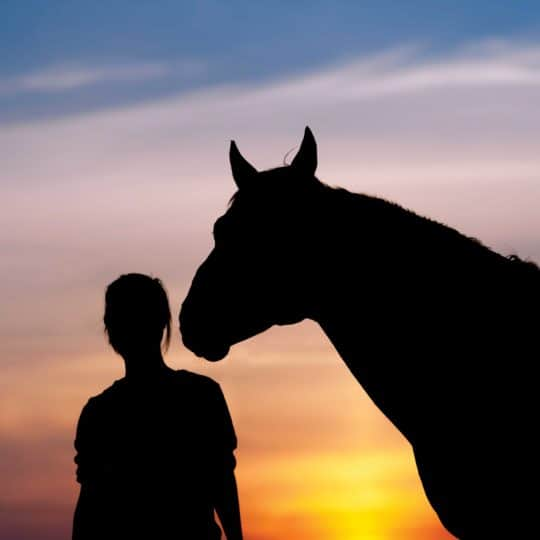 How to deal with losing your horse