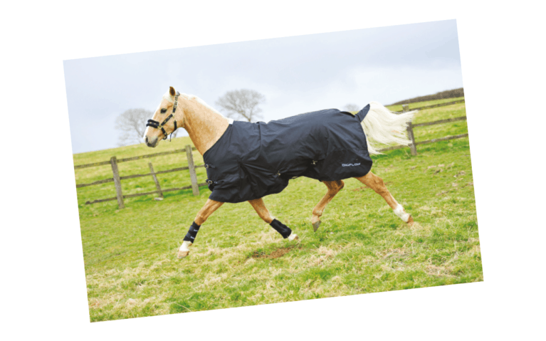 Gear Guide Equestrian Product Reviews And Releases Horse
