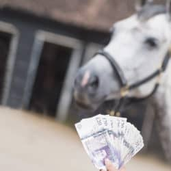 Real-cost-of-keeping-a-horse-v2