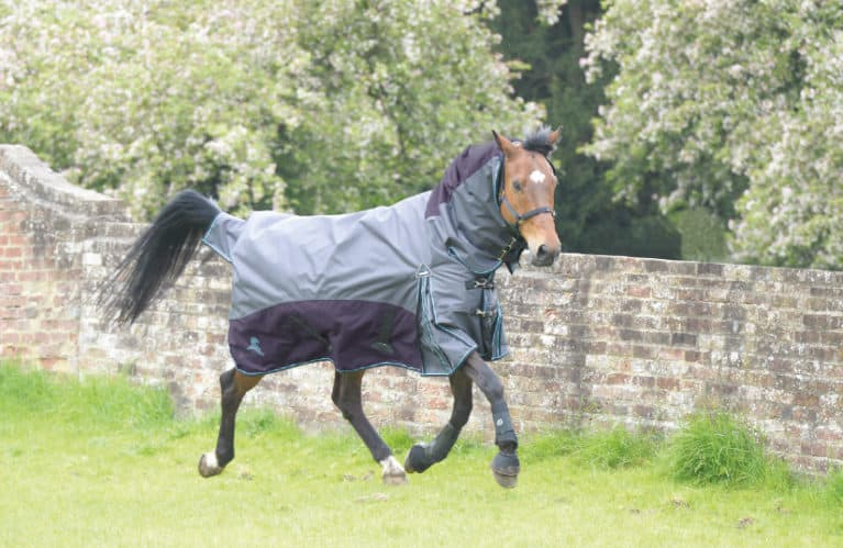 Fieldmasta 100g fixed neck turnout rug