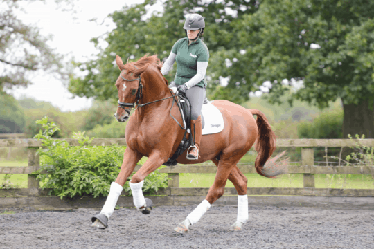 Exercises to improve his canter