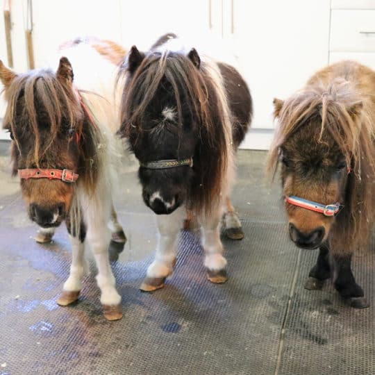 Bransby horses rescue