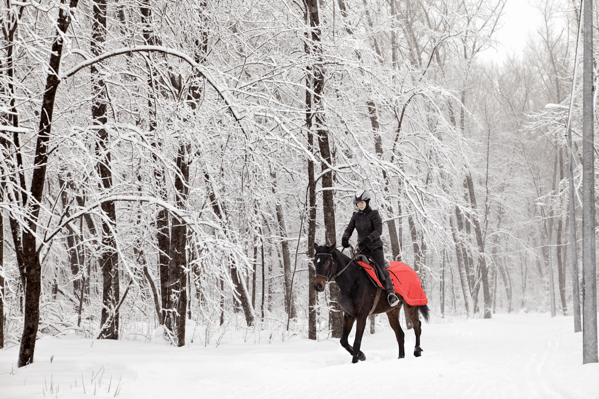 Your Essential Winter Kit List Horse And Rider