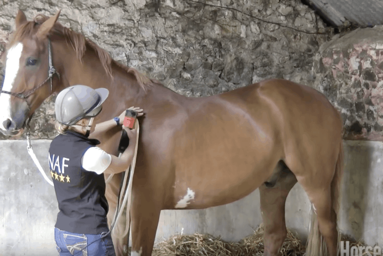 Emma Massingale – How to teach your horse to be clipped