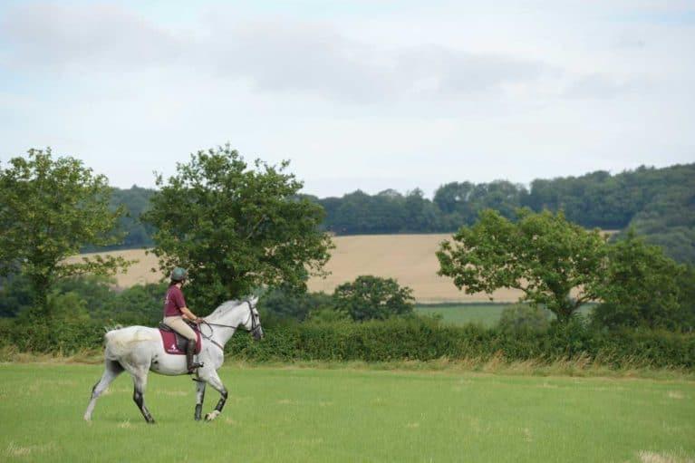 Ex-racehorse (Clare Poole)