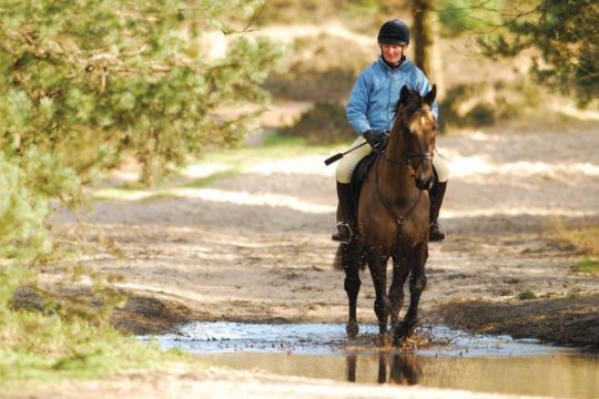 Banish Riding Worries