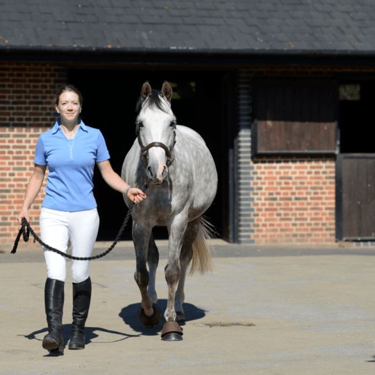 7 Signs your horse wears the trousers