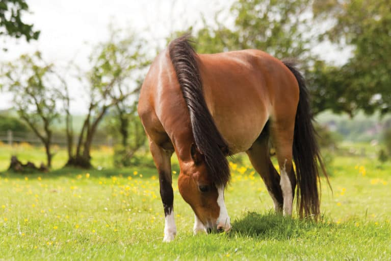 manage your horse's weight