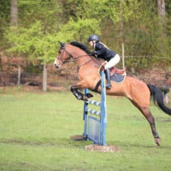 Secrets to showjumping success