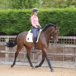 Managing an excitable horse