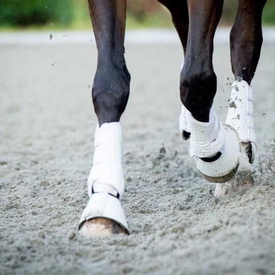 Horses booted legs to help prevent splints