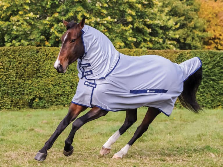 Bucas Buzz-Off full neck fly rug tried and tested by Horse&Rider