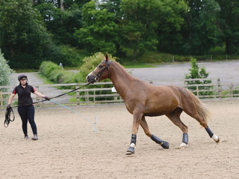 Horse with kissing spine being lunged showing signs of discomfort