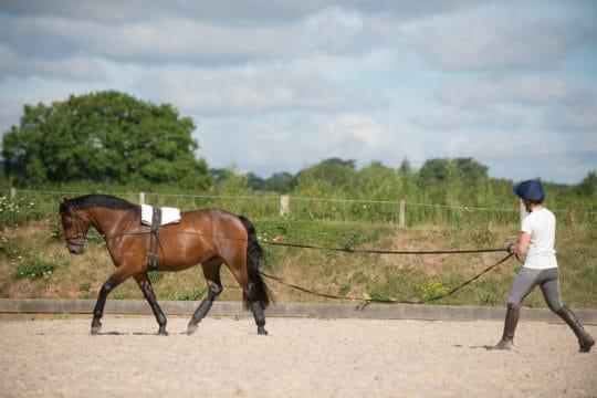Long-reining on a circle