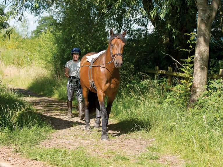 Rider long-reining horse out hacking