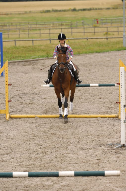 Horse altering its striding between poles to lengthen stride
