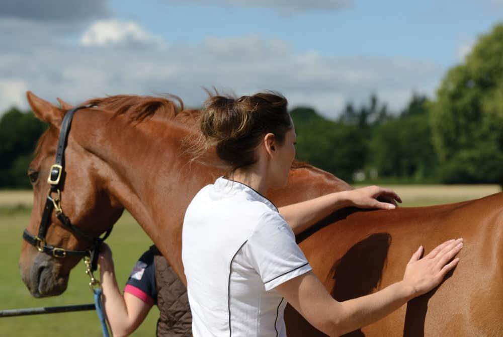 Vet examining horse's spine
