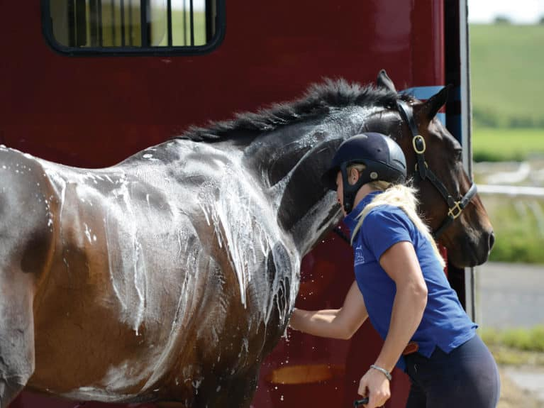 Horse being washed down after galloping
