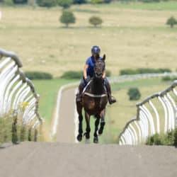 Horse and rider galloping