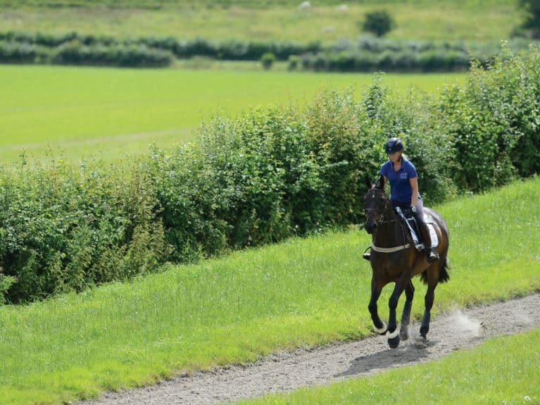 horse and rider at the gallops