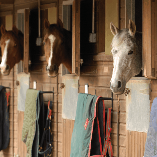 Types of horses at a livery yard