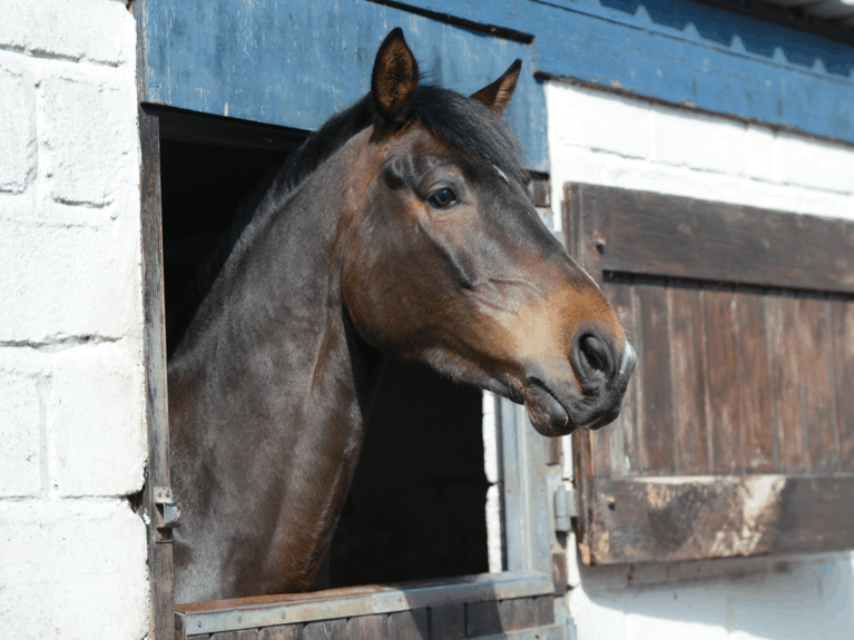 The livery yard equine character who's a drama queen