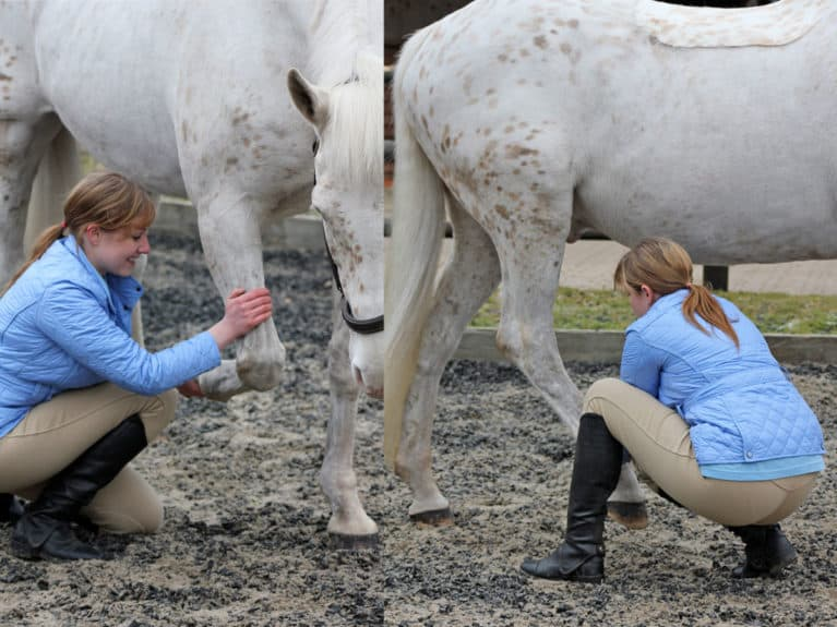 Horse stretch for the legs
