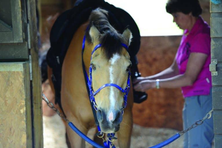 Horse body language